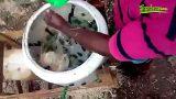 Jamaican Man Invents Feather Plucking Machine