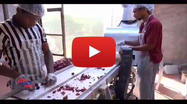 VIDEO Jamaicans Invent a Sorrel Harvesting Machine p