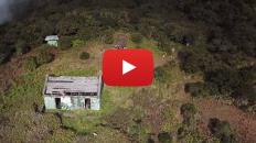 Hike up Blue Mountain Jamaica video